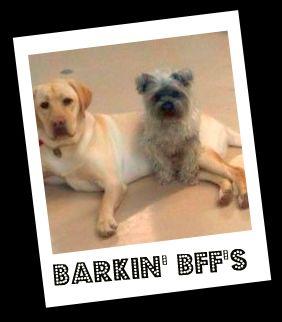 Barkinbffs